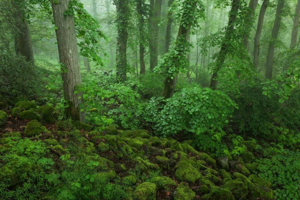Moosbewachsener Wald