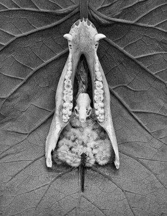 Stillleben mit Tierknochen, Libelle und Blüten auf einem Blatt