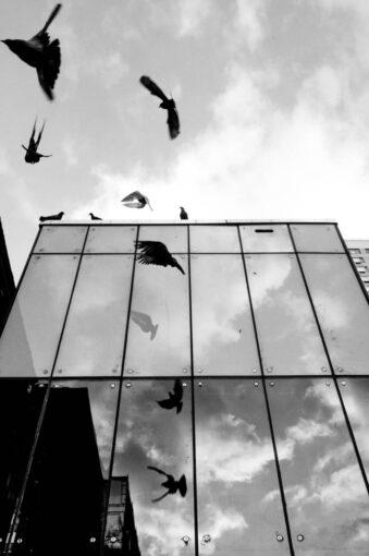 Hausfassade mit Vögeln