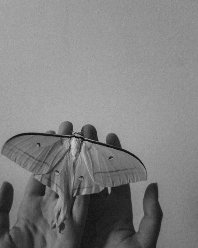 Schmetterling auf Händen