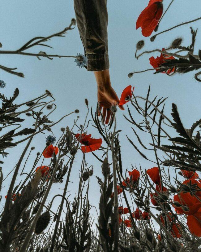 Hand über Mohnblumen