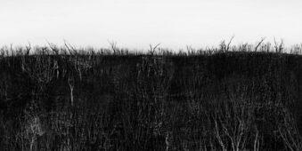 Schwarzweiße Landschaft