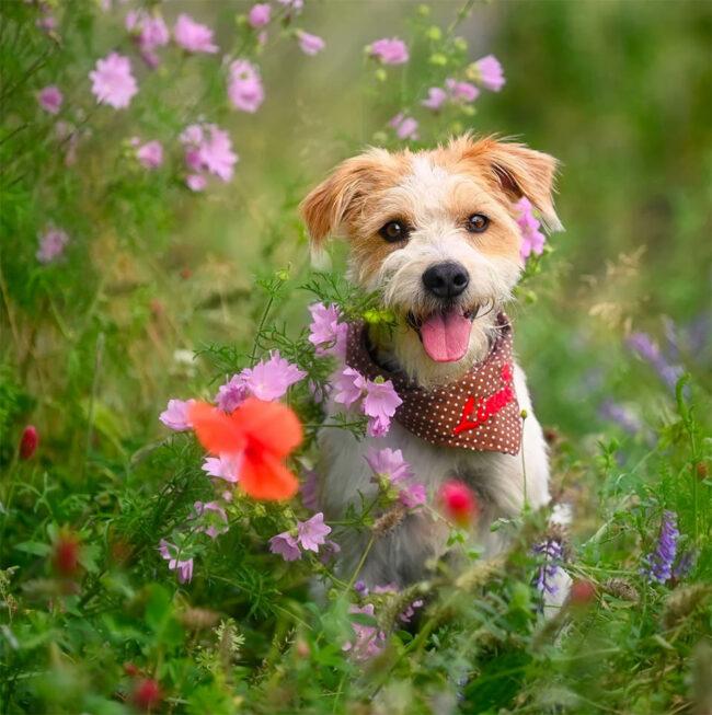 Hundeportrait in Blumen