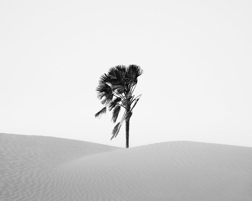 Palme in weißem Sand in schwarzweiß