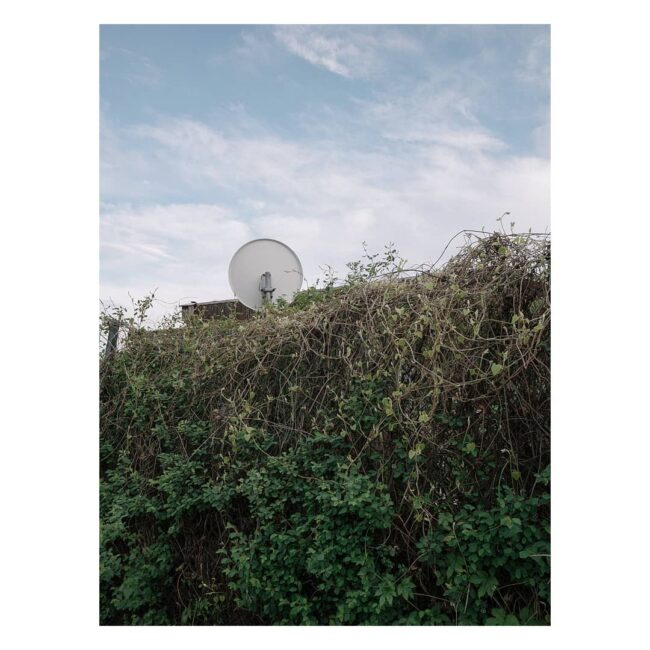 Satellitenschüssel hinter Wildwuchs