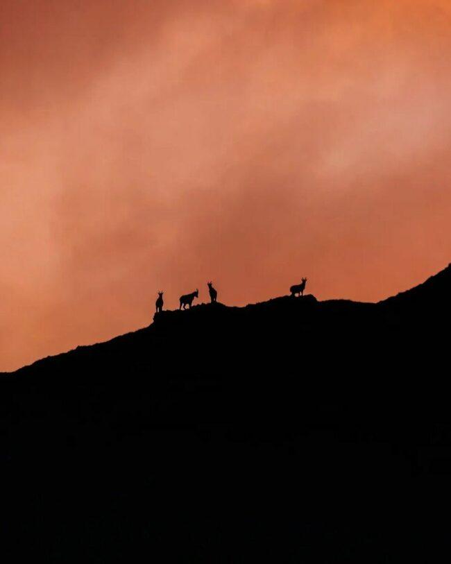 Tiere als Schattenriss auf einem Berg
