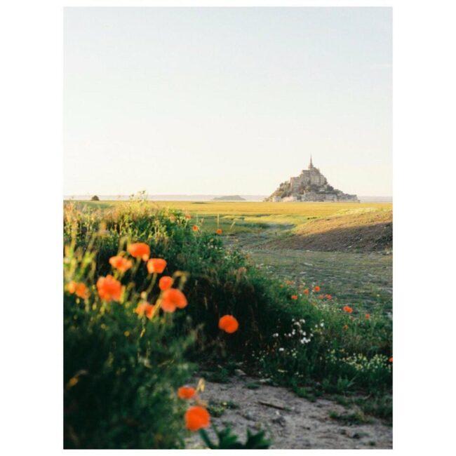Blumen im Vordergrund und im Hintergrund eine Burg auf einem Berg