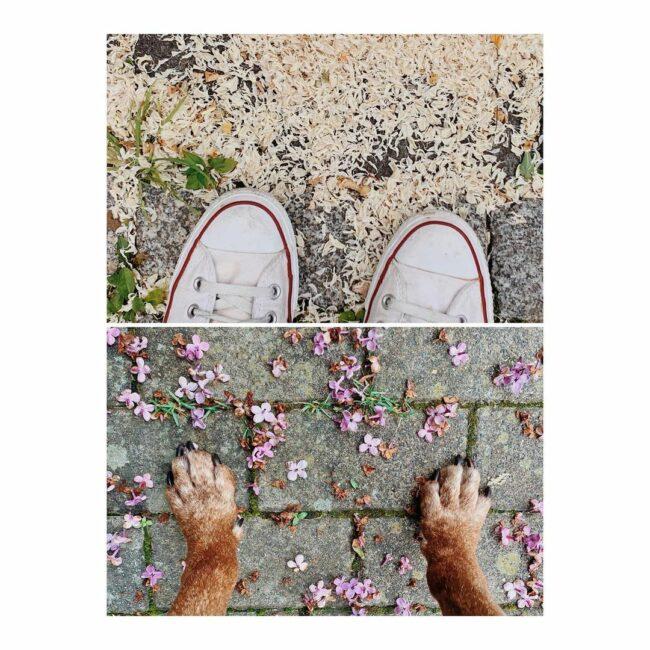Schuhe und Pfoten stehen in Blüten