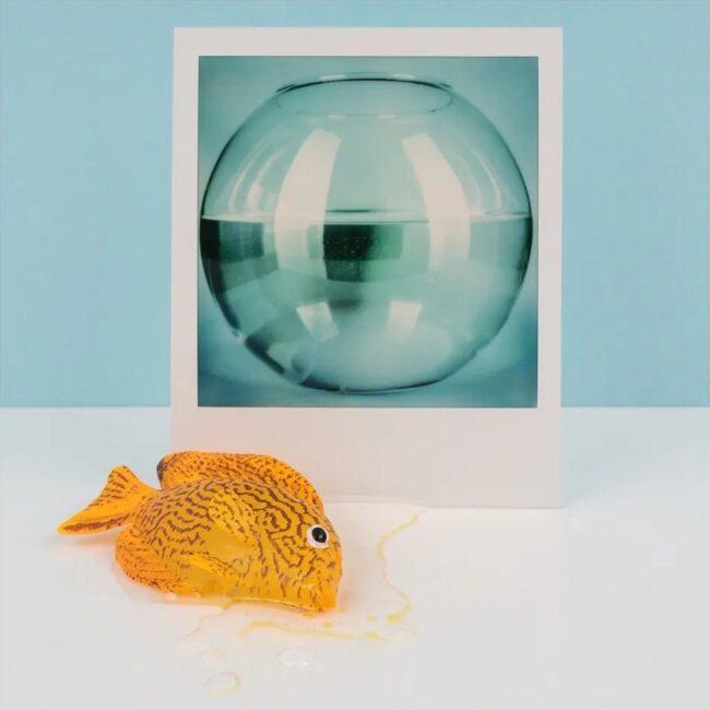 Polaroid eines Goldfischglases, vor dem ein Fisch liegt