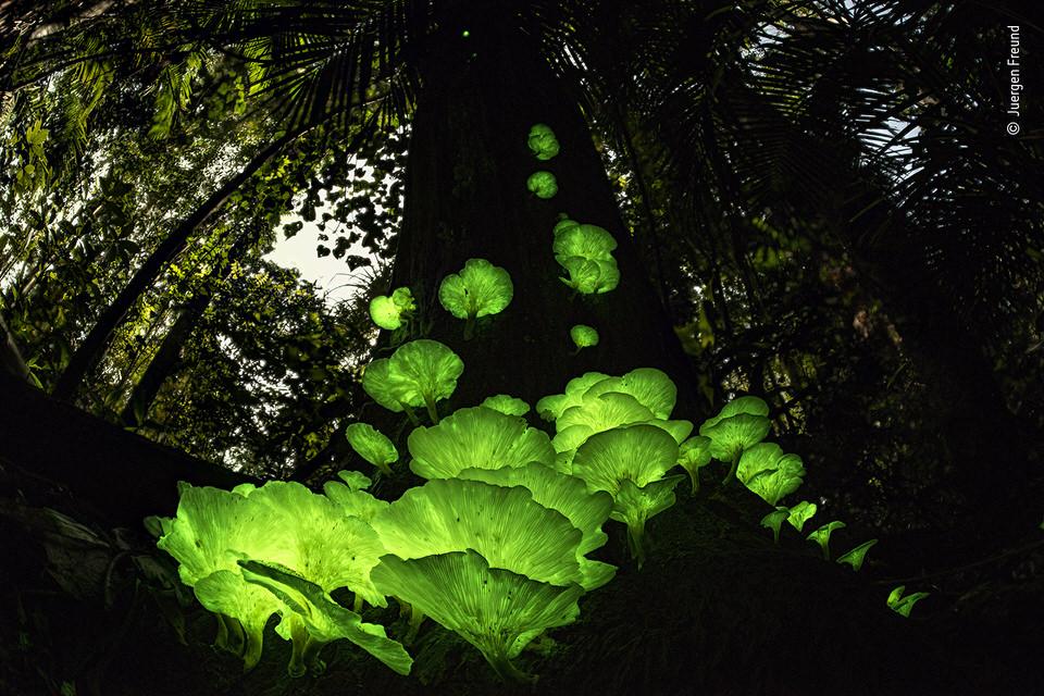 Leuchtende Pilze