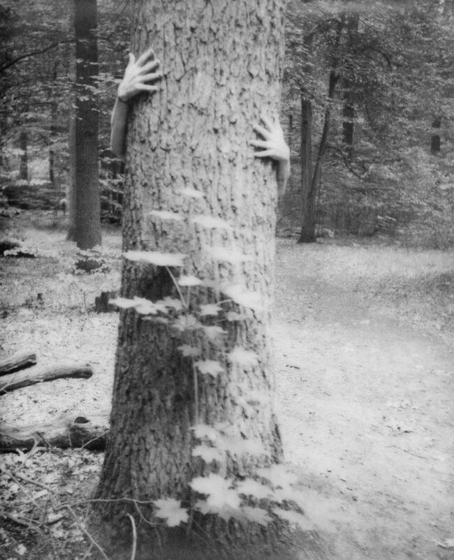 arme umarmen einen Baum