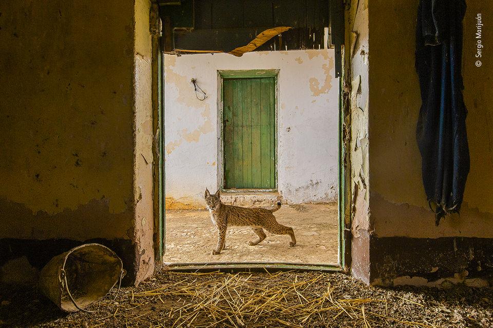 Tier vor einer Tür