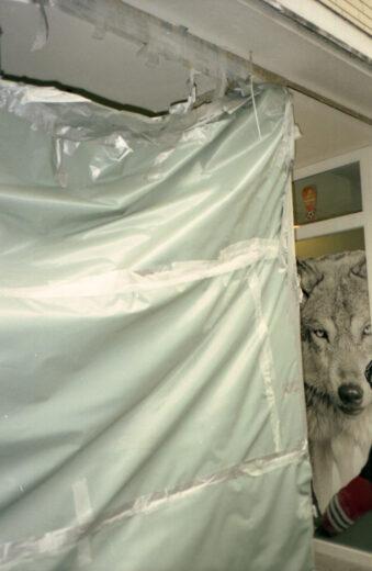 Ein Wolf hinter einer Plane