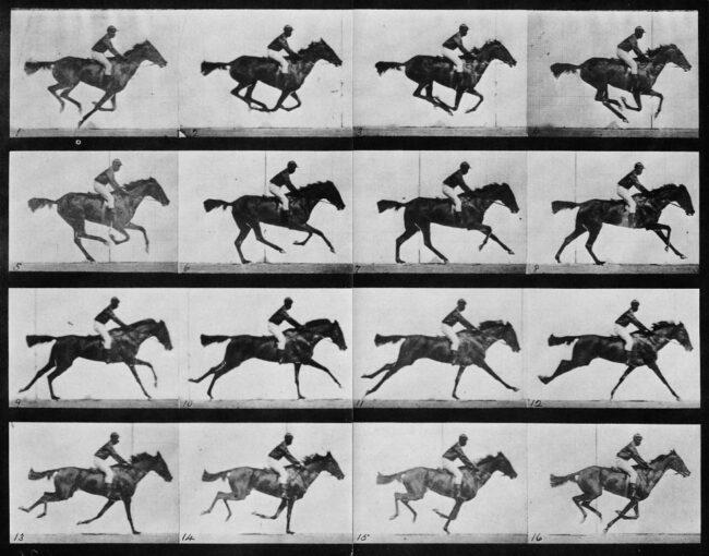 Bilderserie Bewegungsablauf berittenes Pferd