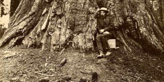 Mann sitzt am Fuß eines großen Baumstamms