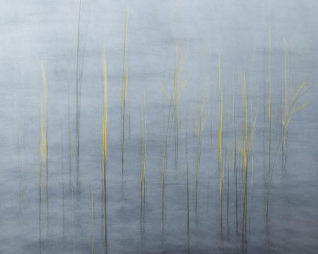 Surreales Bild von Gräsern im Wasser