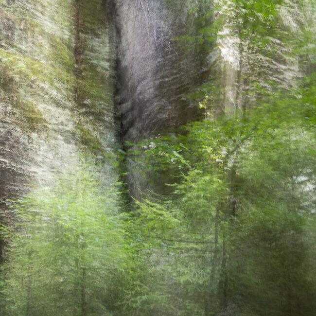 Unscharfes Waldbild