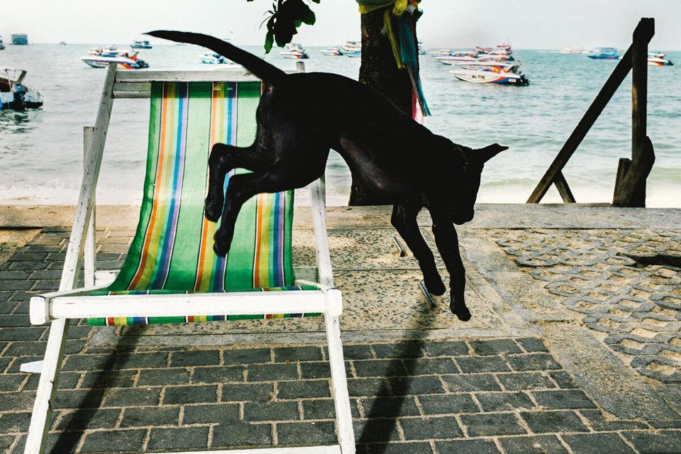 Ein Hund springt vom Liegestuhl